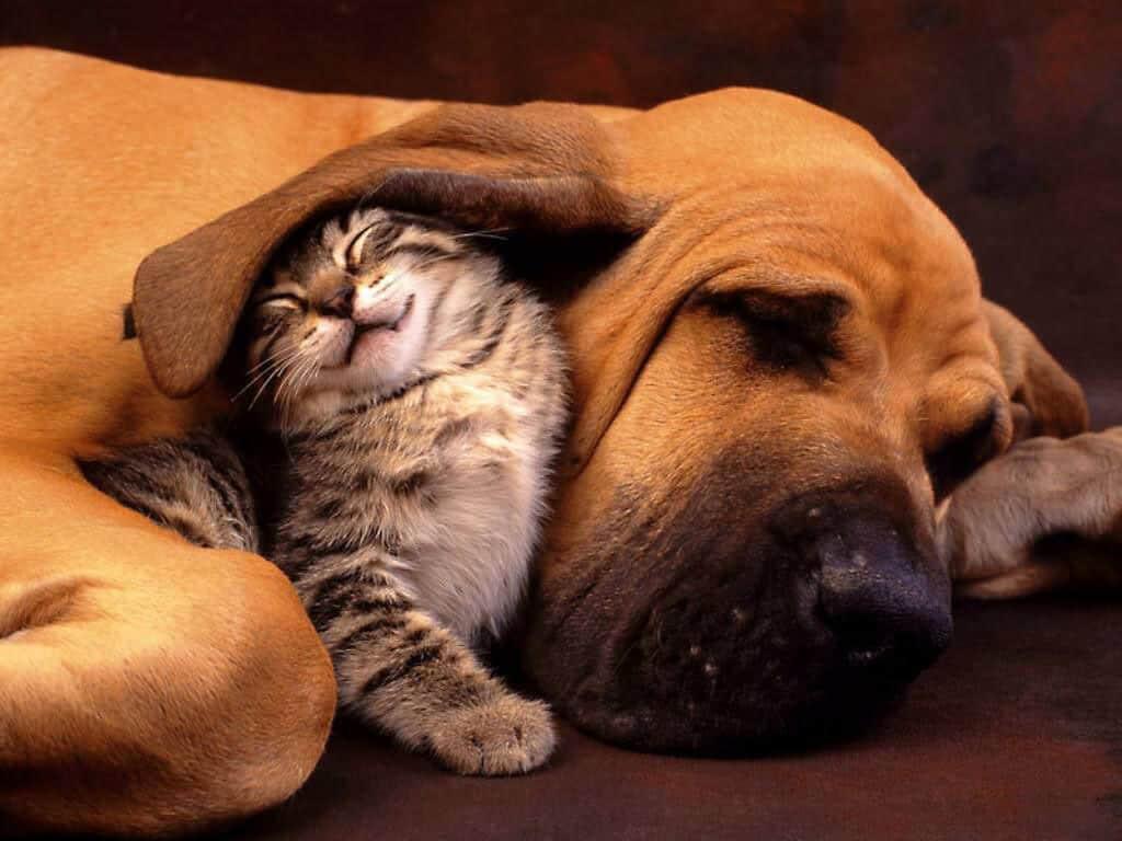 Экзема у собак и кошек