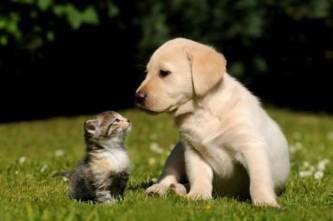 особенности дерматита у домашних животных