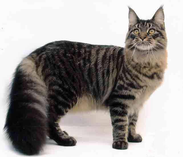 аллергия на кота симптомы