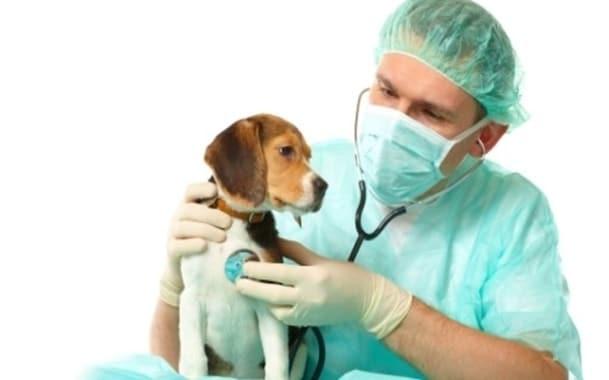 собака может заболеть гриппом